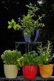 Fresh herbs in pots. On a balcony Stock Photo