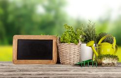 Fresh herbs in pots Stock Photography