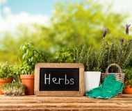 Fresh herbs in pots Royalty Free Stock Photography