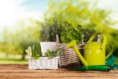Fresh herbs in pots Stock Photos