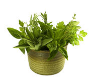 Fresh herbs in pottery Royalty Free Stock Photos
