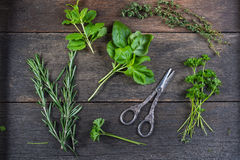 Fresh herbs preparation for drying Royalty Free Stock Photos