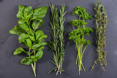 Fresh herbs preparation for drying Royalty Free Stock Image