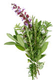 Fresh Herbs - Rosemary, Sage, Oregano. A bouquet garni of fresh rosemary, flowering sage, and oregano stock images