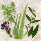 Fresh Herbs for Skin Care. With marjoram, lavender, aloe vera and comfrey leaf and flower sprigs Stock Images