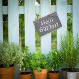 Fresh herbs, slate. Several garden herbs and slate Stock Photos