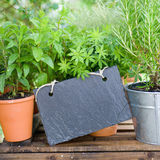 Fresh herbs, slate. Several garden herbs and slate on a wooden box Royalty Free Stock Photography