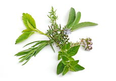 Fresh herbs, spice. Fresh Herbs - Rosemary, Sage, Oregano, thyme, melisa Royalty Free Stock Photography