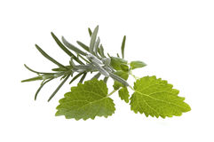Fresh herbs and spices. Rosemary, lavender, lemon balm.  isolated on the white Stock Photography