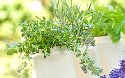 Fresh herbs - spices Stock Images