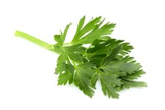 Fresh herbs spices. Celery leaves. Fresh herbs spices. Celery leaves isolated closeup on white background royalty free stock photography