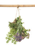 Fresh herbs. Spices food ingredients thyme, oregano, marjoram Royalty Free Stock Photos