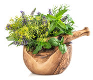 Fresh herbs and spices mint, basil, dill, rosemary, sage, lavend Stock Images