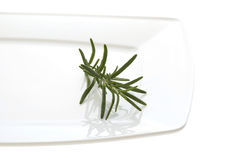 Fresh herbs and spices. rosemary. Isolated on the white Royalty Free Stock Image