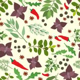 Fresh herbs and spices seamless pattern Royalty Free Stock Image