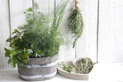 Fresh herbs and spices on white planks Royalty Free Stock Photo
