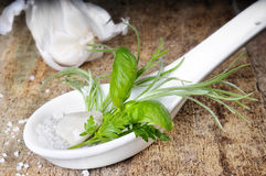 Fresh herbs in spoon Royalty Free Stock Images