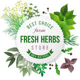 fresh herbs store emblem Stock Images