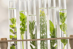 Fresh herbs in test tube Royalty Free Stock Image