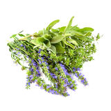 Fresh herbs stock photos