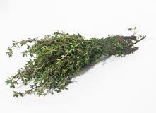 Fresh Herbs: Thyme. On white background Royalty Free Stock Photos