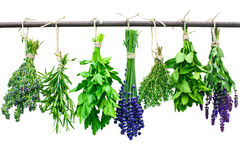 Fresh herbs. Various fresh herbs hanging in bunches on a leash royalty free stock photo