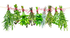 Fresh herbs. Various fresh herbs hanging in bundle on a leash royalty free stock image