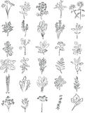 Fresh herbs. Vector collection of fresh herbs in line art Stock Image