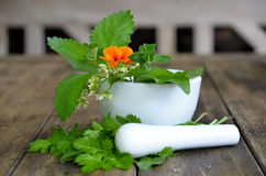 Fresh herbs vitamins Stock Photography