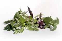 Fresh herbs on white Royalty Free Stock Photos