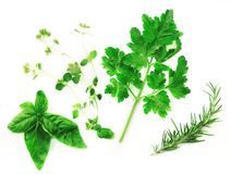 Fresh Herbs on a White Background Royalty Free Stock Image