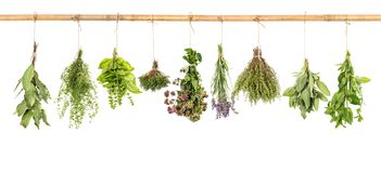 Fresh herbs white background basil sage thyme mint bay laurel. Fresh herbs hanging isolated on white background. Bundle of basil, sage, thyme, mint, bay laurel royalty free stock photography