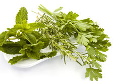 Fresh herbs on white plate. Fresh herbs: rosemary, mint and parsley royalty free stock image