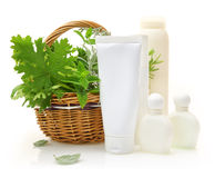 Fresh herbs in wicker basket Stock Image