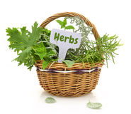 Fresh herbs Royalty Free Stock Images
