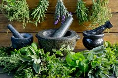 Free Fresh Herbs With Mortar And Pestle Against Rustic Wooden Background Stock Images - 143008224