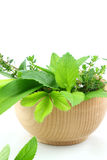 Fresh herbs in bowl Stock Photos