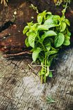 Fresh herbs on wood stock images