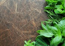 Fresh herbs on wooden background Stock Images