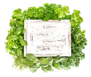 Fresh herbs with wooden board for your text stock photos