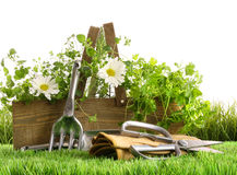 Fresh herbs in wooden box on grass Royalty Free Stock Images