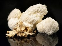 Fresh Hericium Mushroom - Healthy Nutrition stock photos