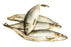 Fresh hering fishes Stock Photos