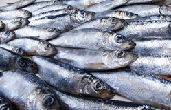 Fresh herring Close-up royalty free stock photography