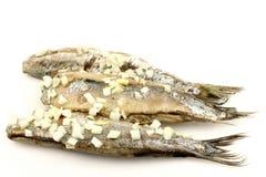 Fresh herring (Dutch Hollandse Nieuwe) Royalty Free Stock Image