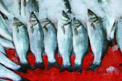 Fresh herring fish Royalty Free Stock Images