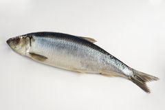 Fresh herring fish Royalty Free Stock Photo