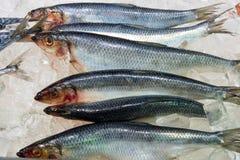 Fresh herring at a fish market Stock Photo