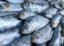 Fresh herring fished Stock Photography