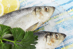 Fresh herring Royalty Free Stock Images